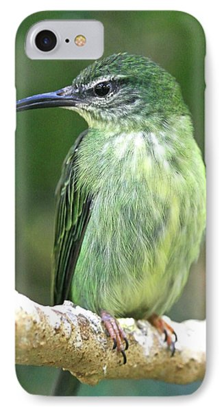 Purple Honeycreeper Female IPhone Case