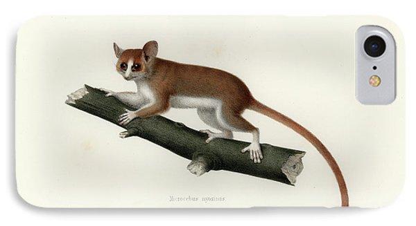 Pygmy Mouse Lemur IPhone Case
