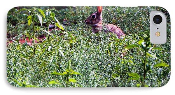 Rabbit In Field IPhone Case