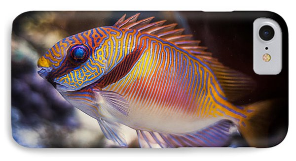 Rabbitfish IPhone Case