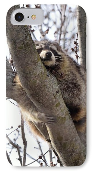 Afternoon Nap-raccoon Up A Tree  IPhone Case