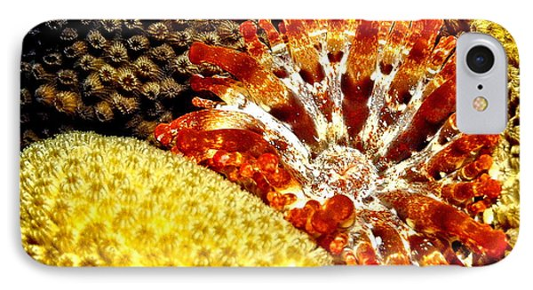Rare Orange Tipped Corallimorph - Fire In The Sea IPhone Case