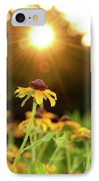 Reaching For Evening Sun IPhone Case