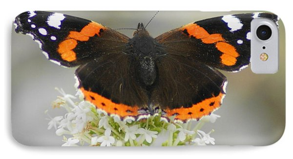 Red Admiral Feeding IPhone Case