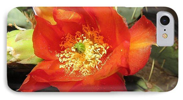 Red Bloom 1 - Prickly Pear Cactus IPhone Case