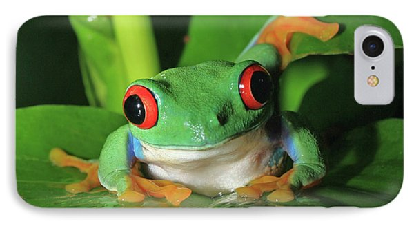 Red Eyed Tree Frog IPhone Case