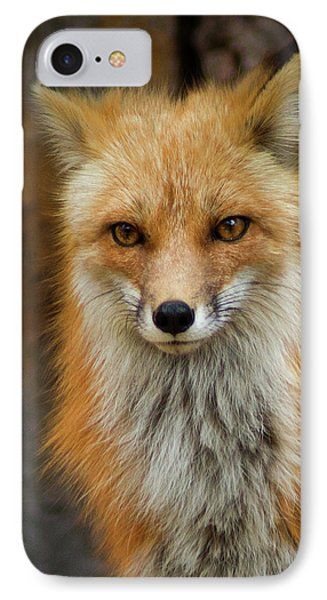 Red Fox Portrait IPhone Case