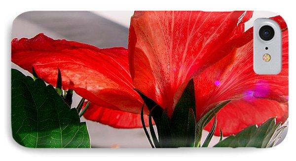 Red Poppy IPhone Case