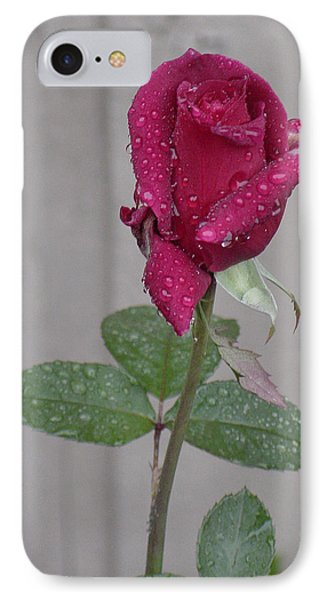 Red Rose In Rain IPhone Case