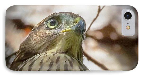 Red-shouldered Hawk Fledgling 3 IPhone Case