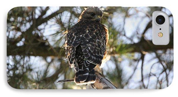 Red Shouldered Hawk Fledgling IPhone Case
