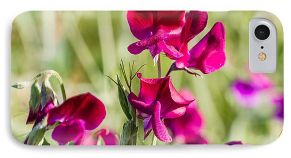 Red Sweet Pea  3340 IPhone Case