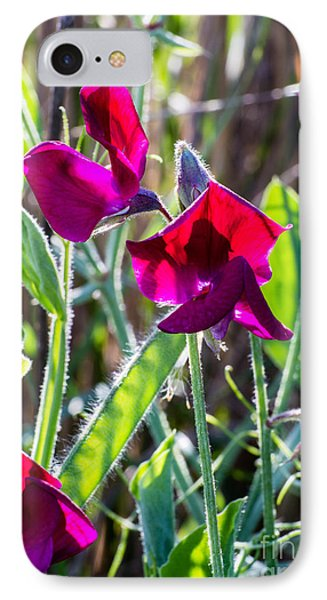 Red Sweet Pea  3411 IPhone Case