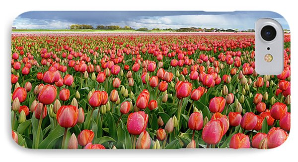 Red Tulip Field IPhone Case