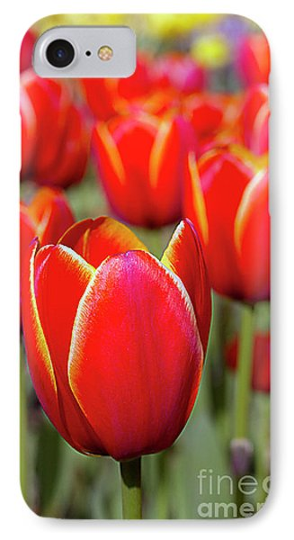 Red And Yellow Tulips I IPhone Case