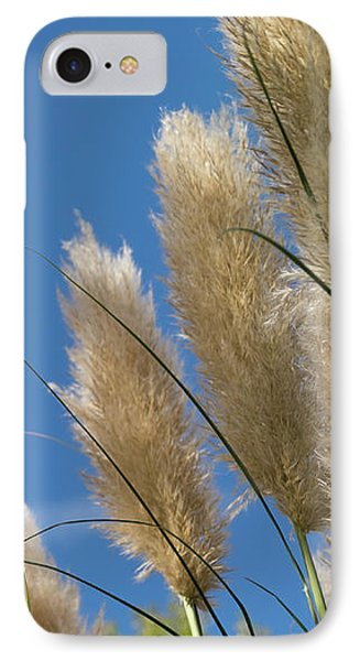 Reeds Against Sky IPhone Case