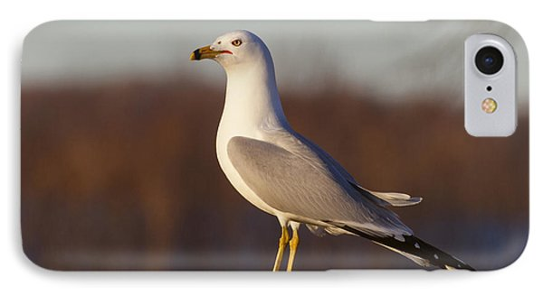 Ring Billed Gull IPhone Case