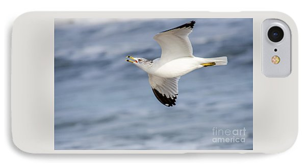 Ring-billed Seagull Looking For Attention IPhone Case