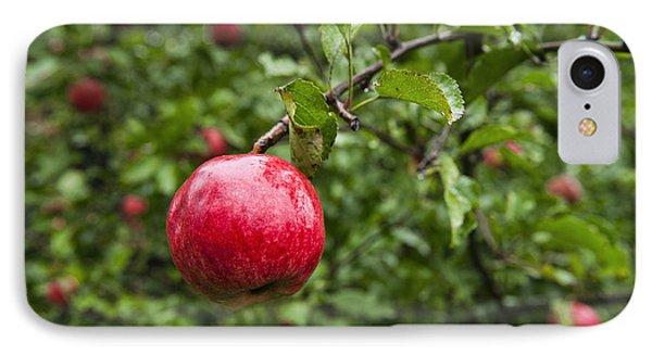 Ripe Apples. IPhone Case