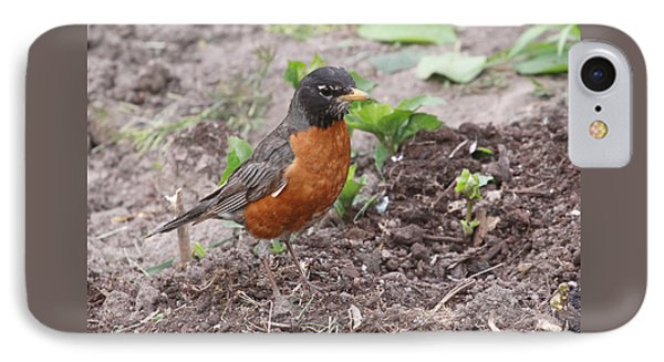 Robin Hunting IPhone Case