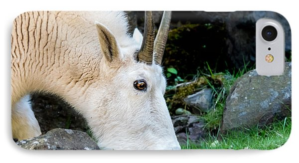 Rocky Mountain Goat Busy Eating IPhone Case
