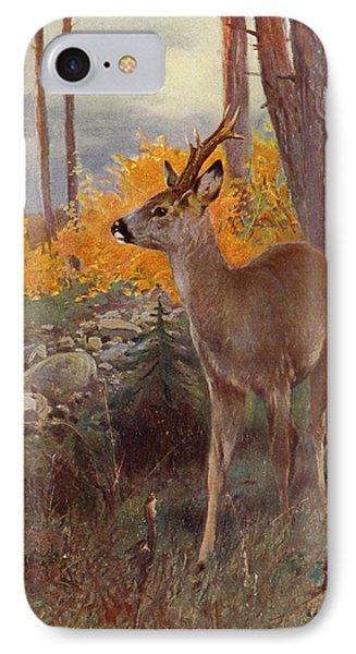 Roe Deer IPhone Case