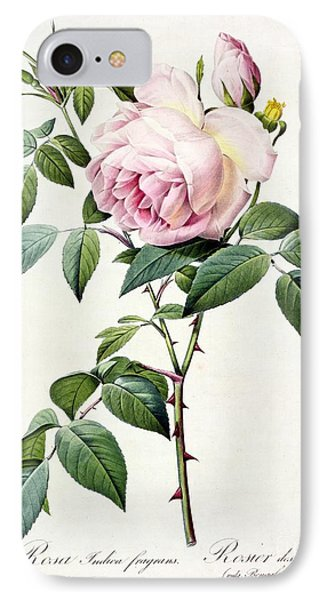 Rosa Indica Fragrans IPhone Case