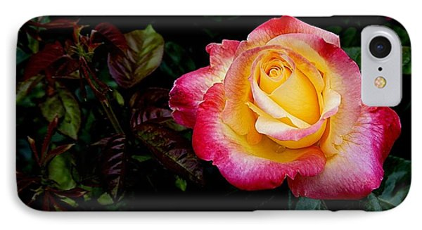 Rose 1 IPhone Case