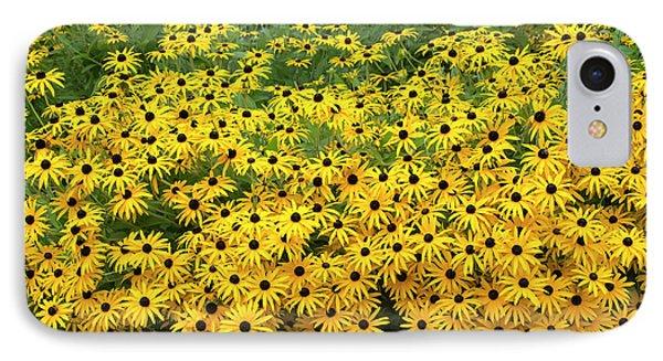 Rudbeckia Fulgida Deamii Flowers IPhone Case