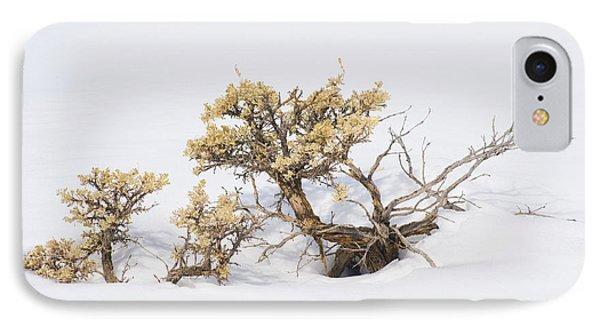 Sagebrush Bonsai In Snow IPhone Case