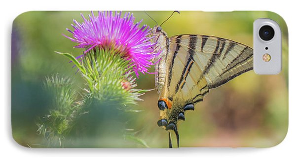 Scarce Swallowtail - Iphiclides Podalirius IPhone Case
