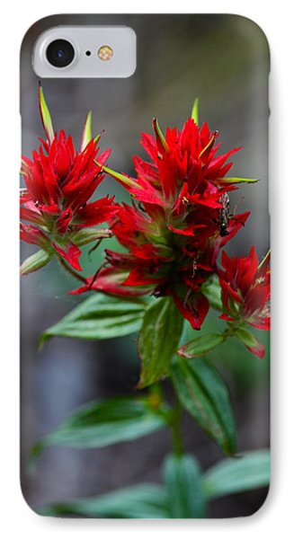 Scarlet Red Indian Paintbrush IPhone Case