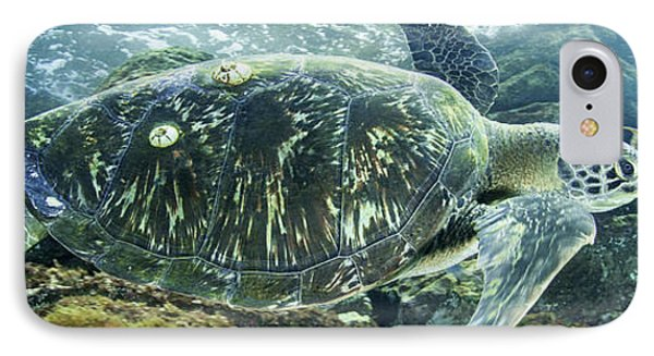 Sea Of Cortez Green Turtle IPhone Case