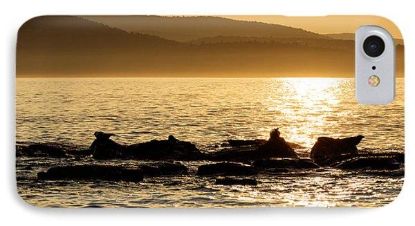 Sea Of Seals IPhone Case