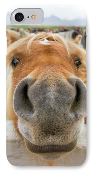 Silly Icelandic Horse IPhone Case