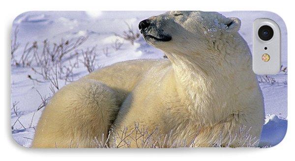 Sleepy Polar Bear IPhone Case