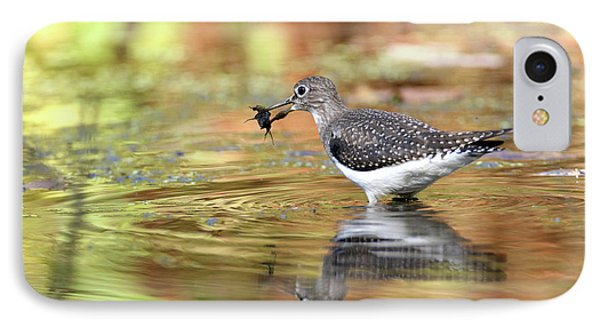 Solitary Sandpiper With Belostomatide IPhone Case