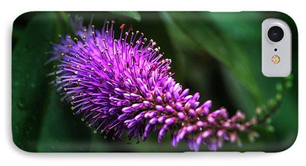 spring beautiful flowers callistemon in subtropics of Russia IPhone Case