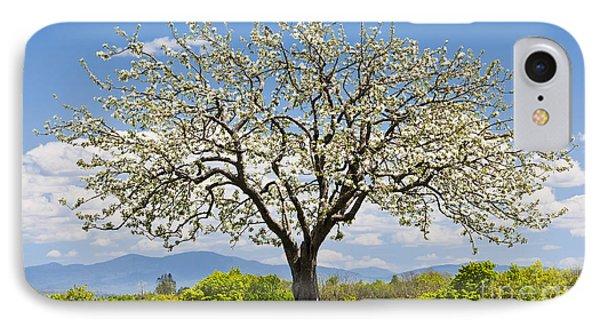Springtime Apple Tree IPhone Case