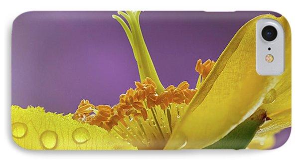 St Johns Wort Flower IPhone Case
