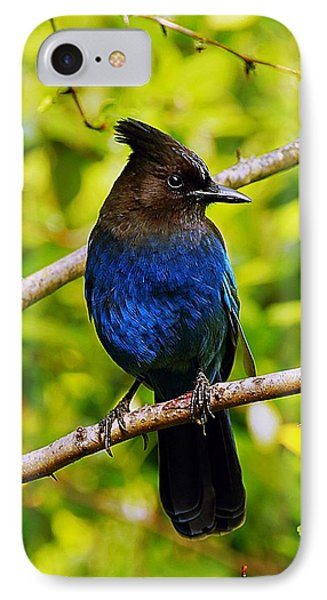 Stellar Jay 10 IPhone Case