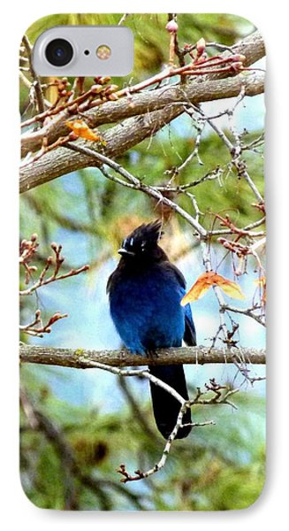 Stellar Jay Majesty IPhone Case
