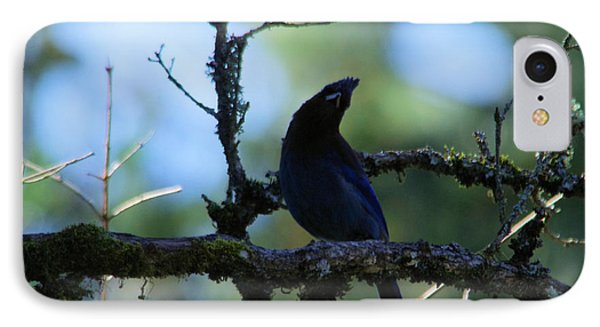 Stellar Jay Tilts Its Head IPhone Case