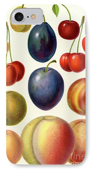 Stone Fruit Or Drupes IPhone Case