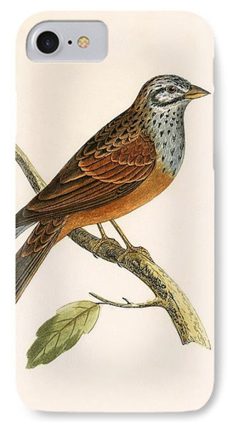 Striolated Bunting IPhone Case