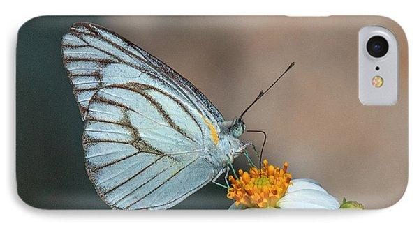 Striped Albatross Butterfly Dthn0209 IPhone Case