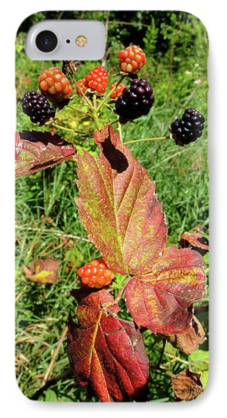 Summer Remnants IPhone Case