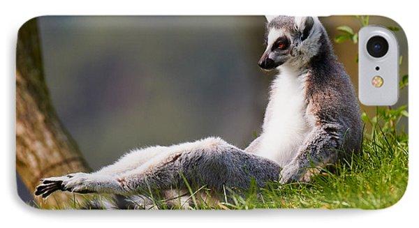 Sun Bathing Ring-tailed Lemur  IPhone Case