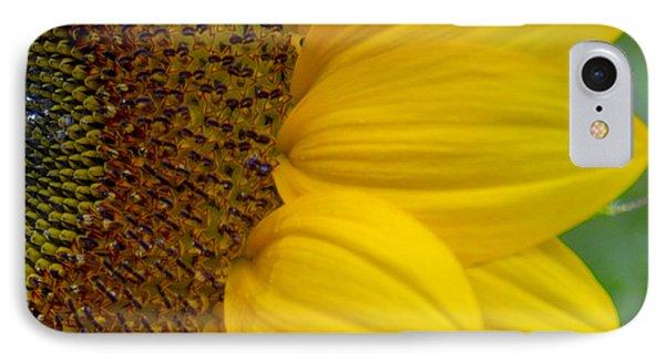 Sunflower Closeup IPhone Case