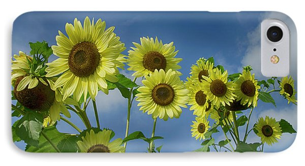 Sunflower Party IPhone Case